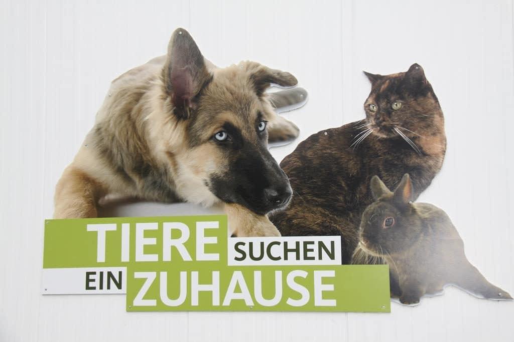 """Besuch beim WDR """"Tiere suchen ein Zuhause"""""""