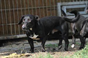 Fellfreunde Hundevermittlung, Adoption Hund, Tiervermittlung