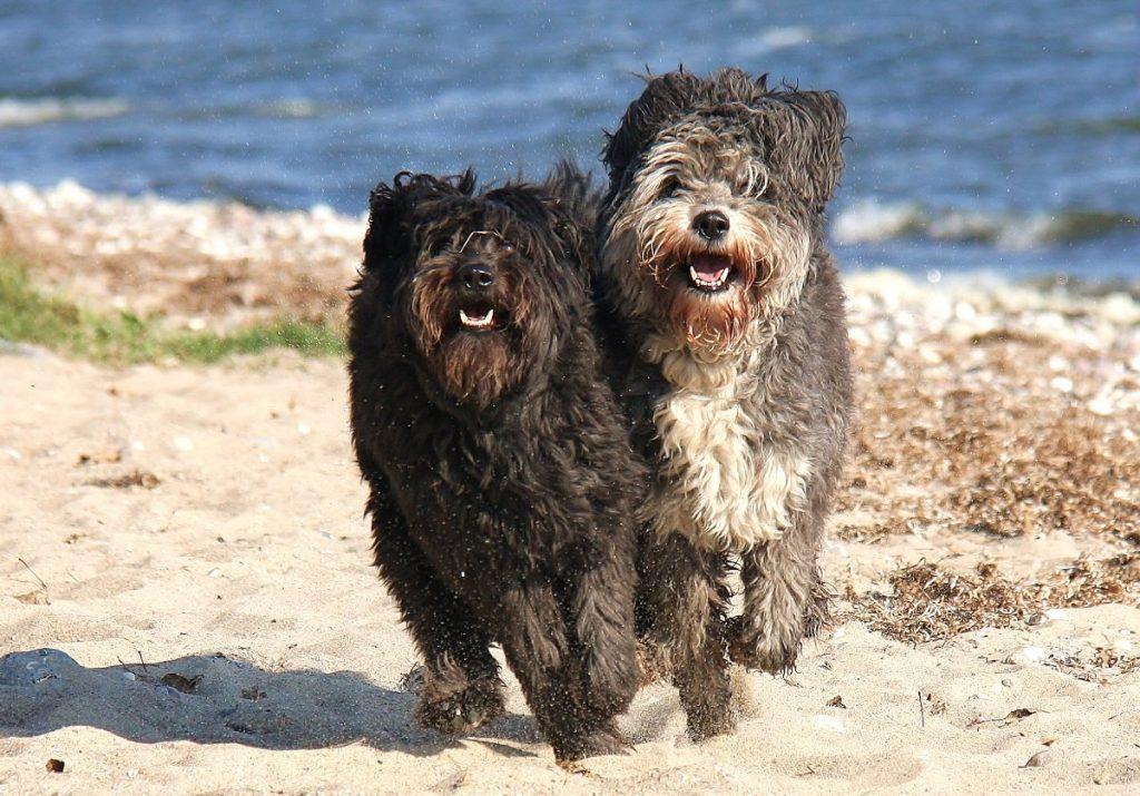 Urlaub im Ferienhaus mit Hund