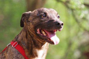 Fellfreunde Regenbogenhunde