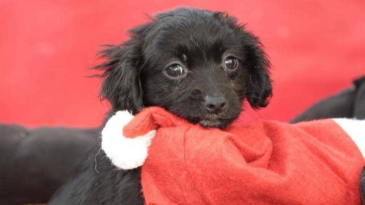 Weihnachtliche Hundekekse – 3. Advent