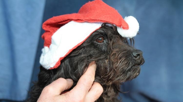 Weihnachtliche Hundekekse – 4. Advent