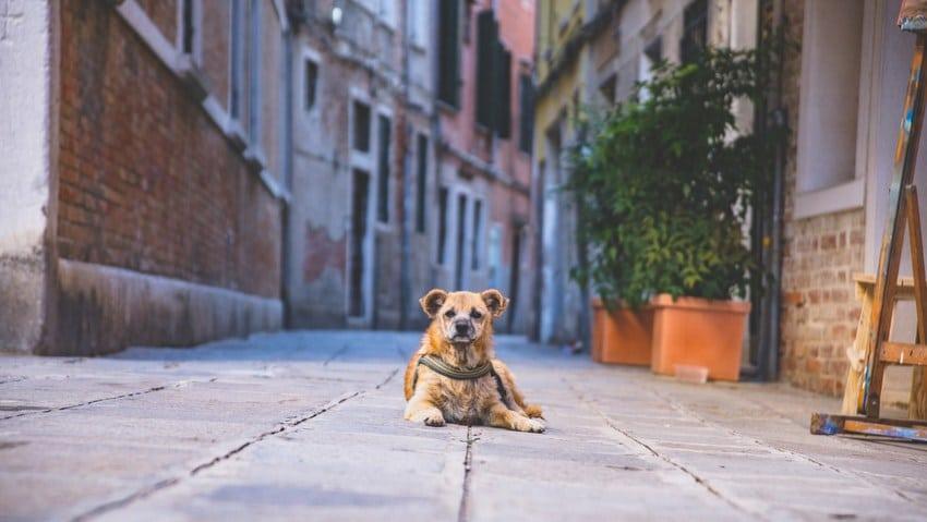 Reise Hund