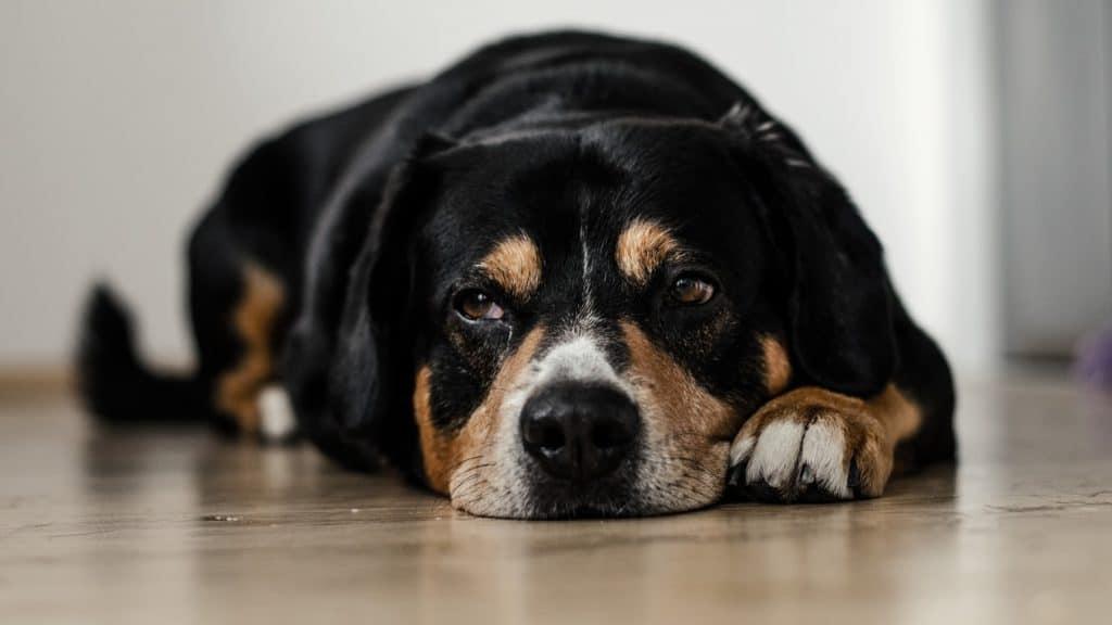 Fellfreunde Hundeversicherungen – Welche Absicherung braucht mein Hund?