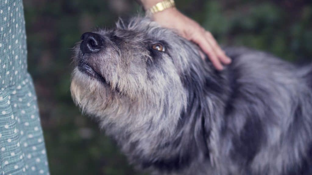 Hundeversicherungen – Welche Absicherung braucht mein Hund?