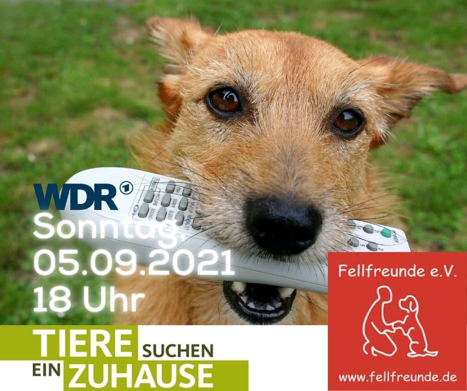 Tiere suchen ein Zuhause - 05.09.2021